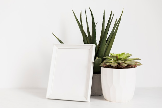 Office plants with frame