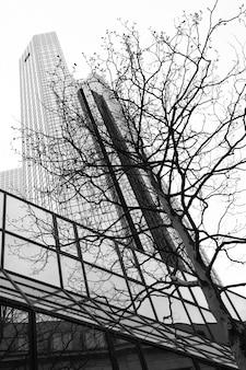 Офисная башня и дерево - концепция природы и технологий. черно-белое изображение