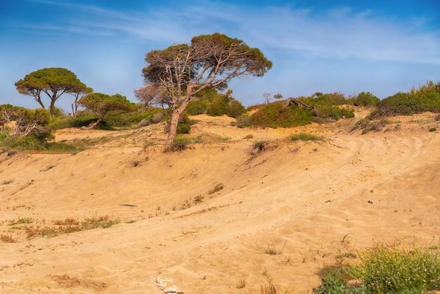 Внедорожная тропа, ведущая через прибрежные песчаные дюны с кустарниковой растительностью и продуваемыми ветрами соснами, склоненными в сторону, среди живописного пейзажа.