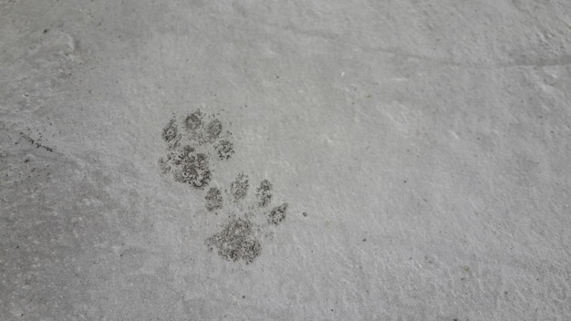 Oil-stained cat feet stepped on the cement floor as a stain, cat foot, 2 side.