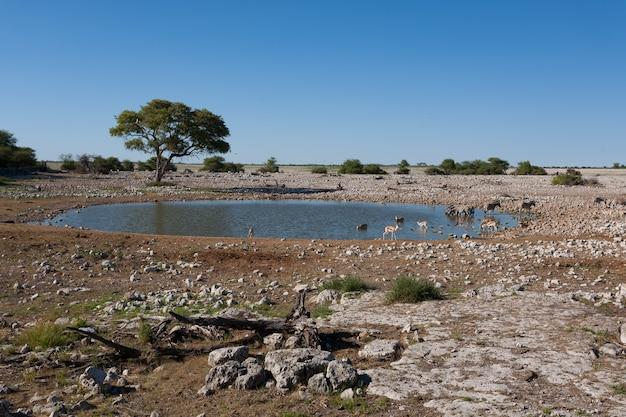 ナミビアのエトーシャ国立公園のオカウクエジョ滝壺