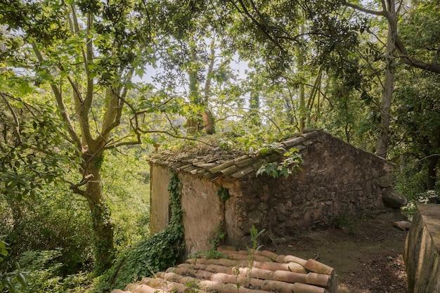 森の中の古い廃墟の建物