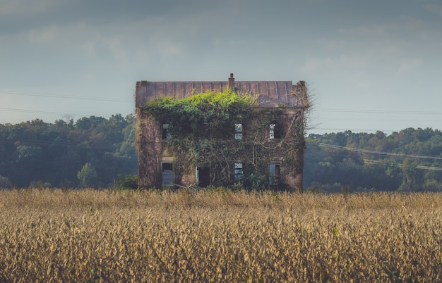 Old abandoned building overgrown by long vines in the middle of a field