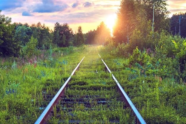 草が生い茂った古い廃線。森の中の線路。日没時の絵のように美しい産業景観。夏の旅行。素晴らしい景色。素晴らしい冒険。鉄道輸送。