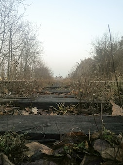 Old abandoned railroad tracks through which grass grows and a row of trees grow on the sides. the sky is sullen from the sun, gloomy