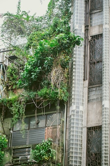 Old apartment building with vine green tree plant grow in the city.