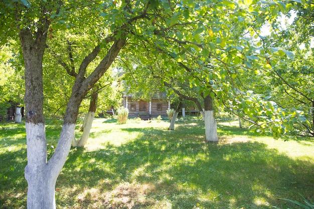 夏の古いリンゴ園