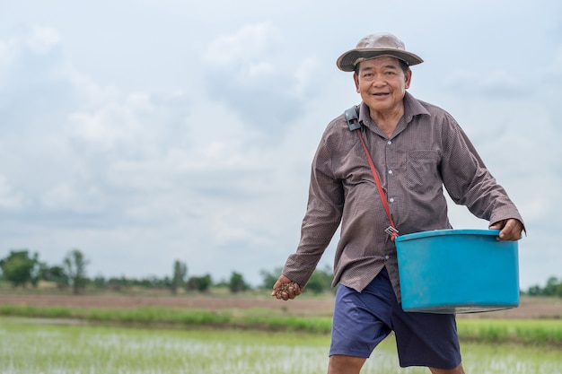 Old asian farmer man is throwing seedlings paddy at a rice field.