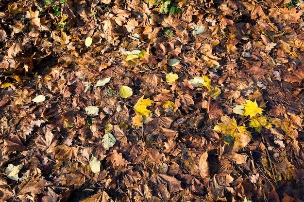 Old autumn foliage on the ground