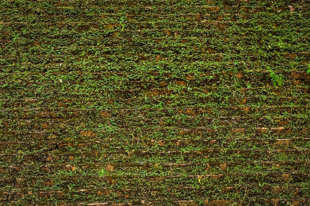 Old background wall large texture with green moss.
