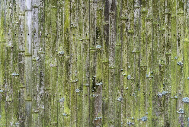 Old bamboo background. wall or fence made of old bamboo. texture of old wood with moss and mold