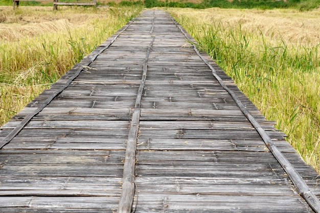 Old bamboo weave bridge on a rice field