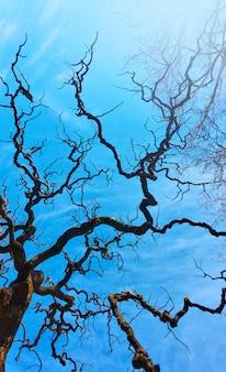Старое голое дерево с изогнутыми ветвями на фоне голубого весеннего неба. воющее дерево