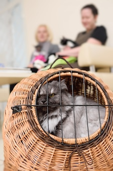 Old beautiful cat sitting in an animal basket against the backdrop of a veterinary clinic.