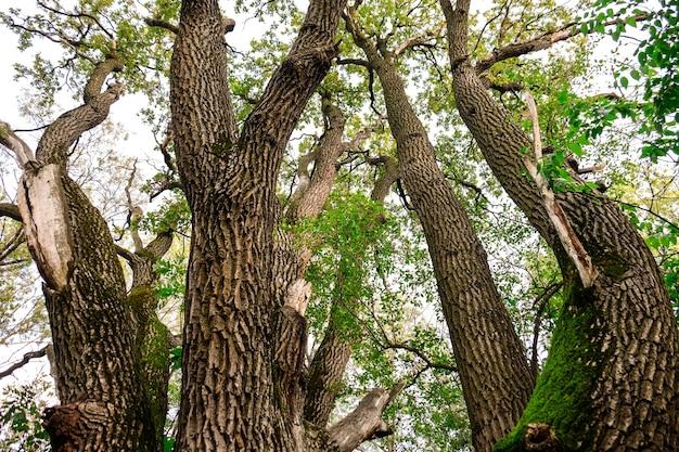 公園の古い大きな木