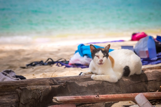 줄무늬가 있는 오래된 흑백 고양이는 모래 해변에 있는 나무에 누워 있다