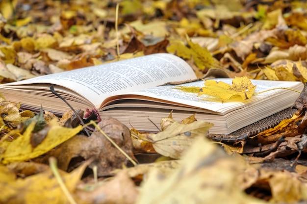 Старая книга лежит на опавших листьях в осеннем парке