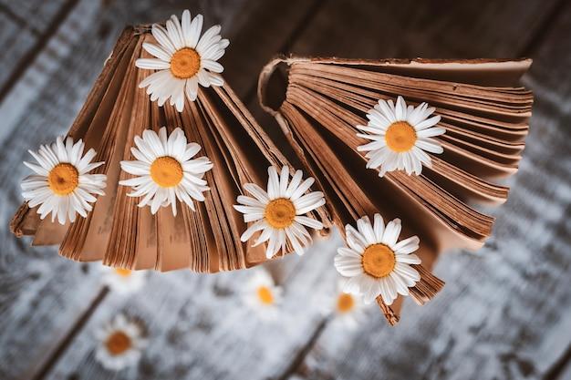白いフィールドのヒナギクの花と古い本。