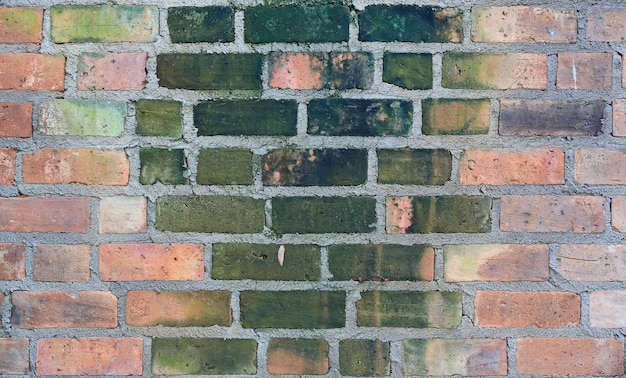 Old brick wall texture background with green algae or lichen