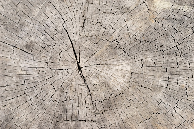 Old bright wood texture background surface with natural pattern