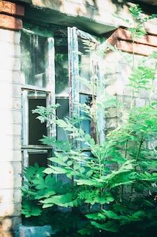 Old broken window overgrown with bush