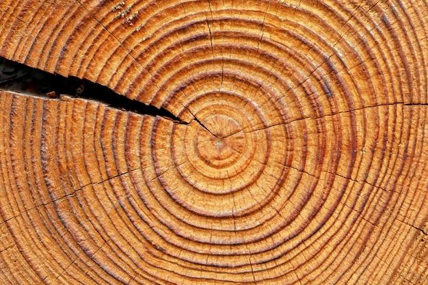Old brown tree rings