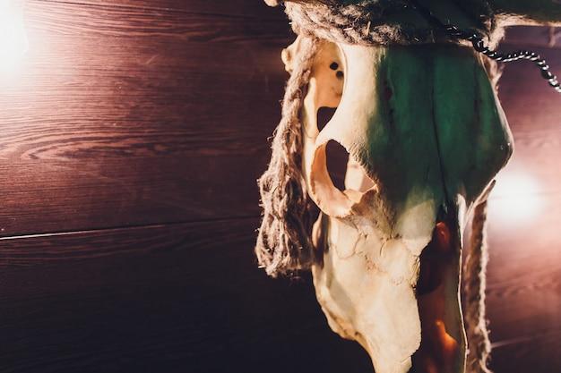 Old buffalo skull hanging on wooden wall.