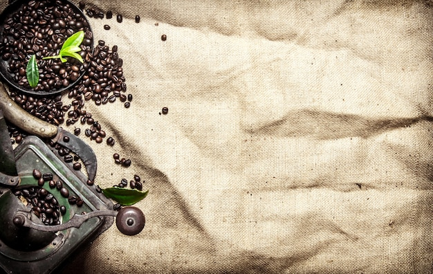 Old coffee style. roasted grain coffee with cinnamon and different old tools. on textile sack.