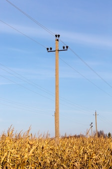 Старый бетонный столб с высоковольтными электрическими проводами, расположенный на территории посевной кукурузы.