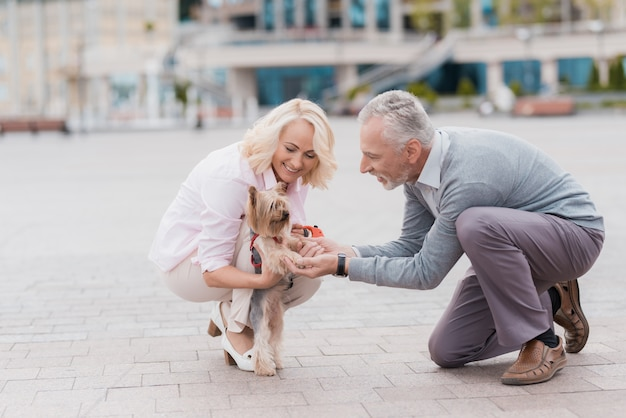 An old couple went out for a walk with a cute little dog.