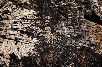Old Cracked Bark Wooden Stump Timber Texture
