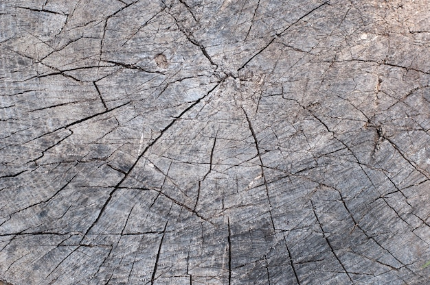 Old cracked tree stump wood texture abstract