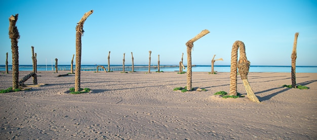 Old dead palm trees on the shore of the sea beach.