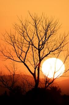 夕暮れ時の雲とカラフルな劇的な空に古い死んだツリー分離