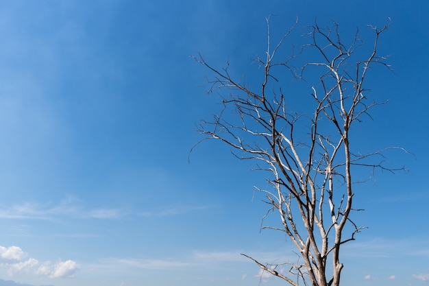 Old dead tree with blue sky background with copy space