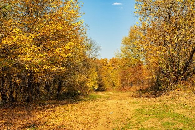 An old dirt road in the autumn forest in the month of october in the afternoon