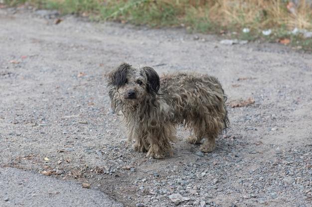 Старая грязная серая бездомная собака
