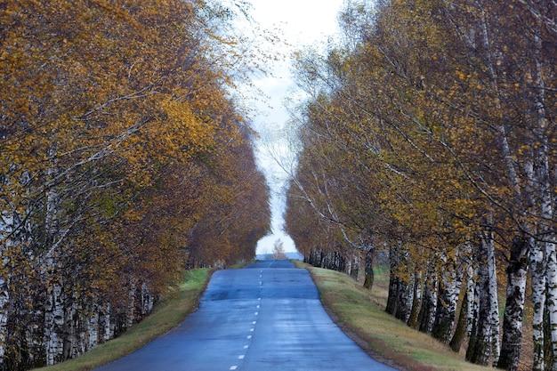 Старая грязная асфальтированная дорога, покрытая трещинами осенью, во время сильного тумана. фотография сделана крупным планом. малая глубина резкости. на заднем плане небо и березы.