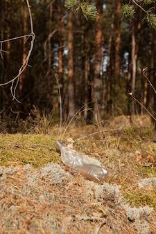 오래된 일회용 플라스틱 병이 숲의 가장자리에 누워있다.