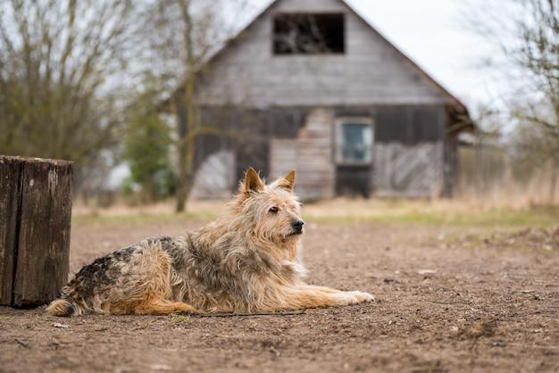 Старая собака охраняет старый дом в деревне