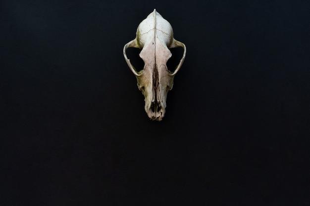 Старый череп собаки на черном бумажном фоне макета для пространства для текста