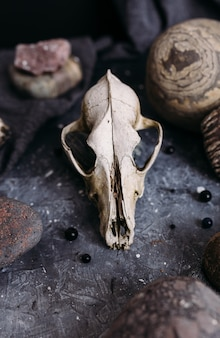 Old dog skull and stones on the witch table dark and mysterious atmosphere