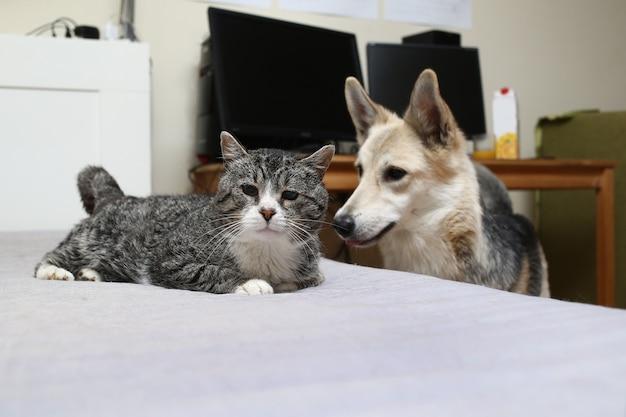 家で古い飼い猫と犬
