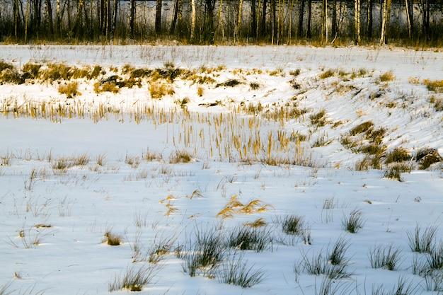 필드에 오래 건조하고 얼어 붙은 겨울 식물, 추운 계절에 겨울 서리 프리미엄 사진