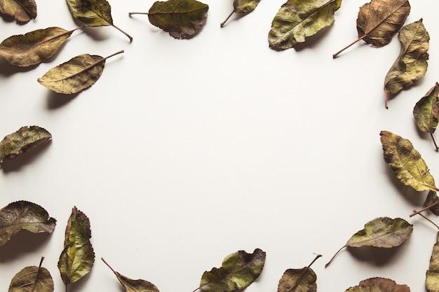 古い乾燥したリンゴの葉。白い背景で隔離