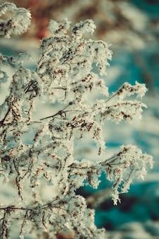 ぼやけた白いフィルターで雪に覆われた古い乾いた草