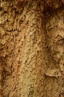 明確な構造を持つ古くて乾燥した虫食いの木