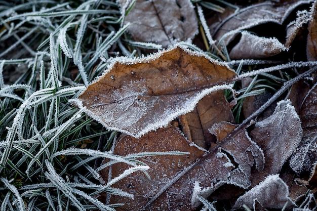 古い乾燥した葉は霜で覆われています。森の最初の霜、冬の接近