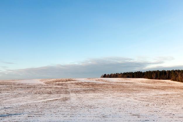 Старая сухая растительность, покрытая снегом. снимок сделан в зимний сезон, крупным планом
