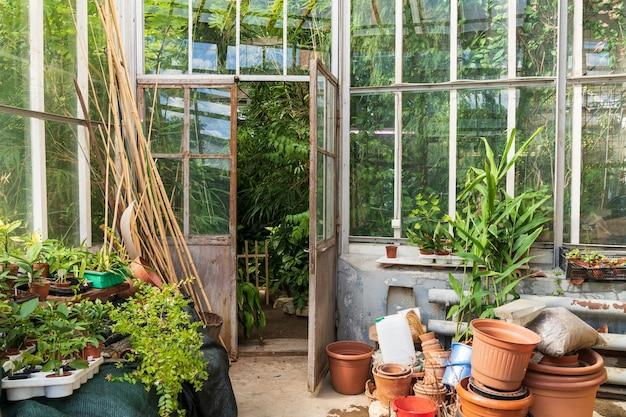 다른 열대 식물이 있는 온실 밖에서 자라는 실내 식물을 위한 오래된 빈 테라코타 냄비